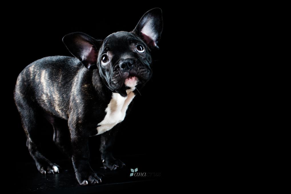 Portfolio de mascotas 41T7671