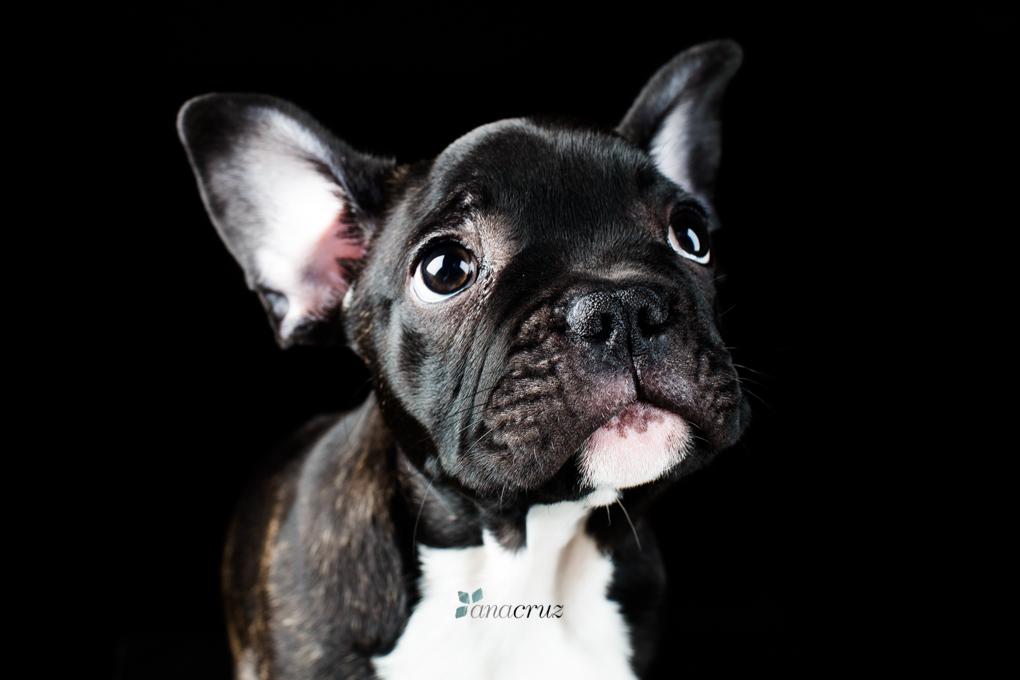 Portfolio de mascotas 41T7708