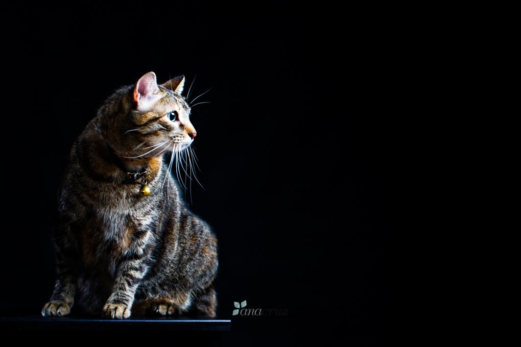 Portfolio de mascotas ANA6049