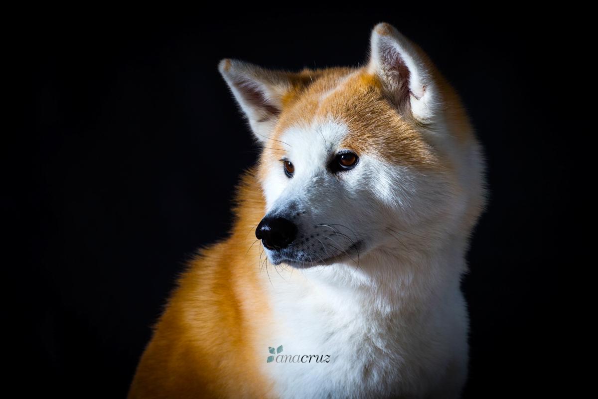 Portfolio de mascotas B41T7275