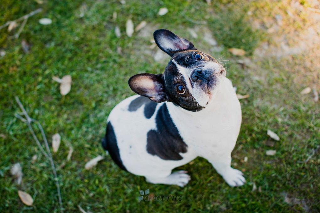 Portfolio de mascotas G5P1875