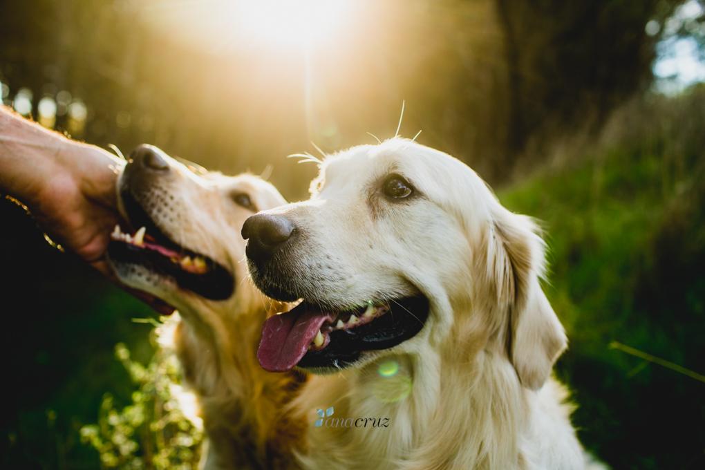 Portfolio de mascotas MASCOTAS0026
