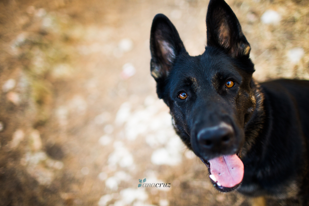 Portfolio de mascotas NA_9313