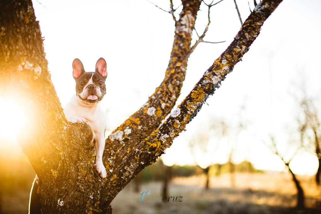 Fotografía de mascotas :: Nika G5P25341