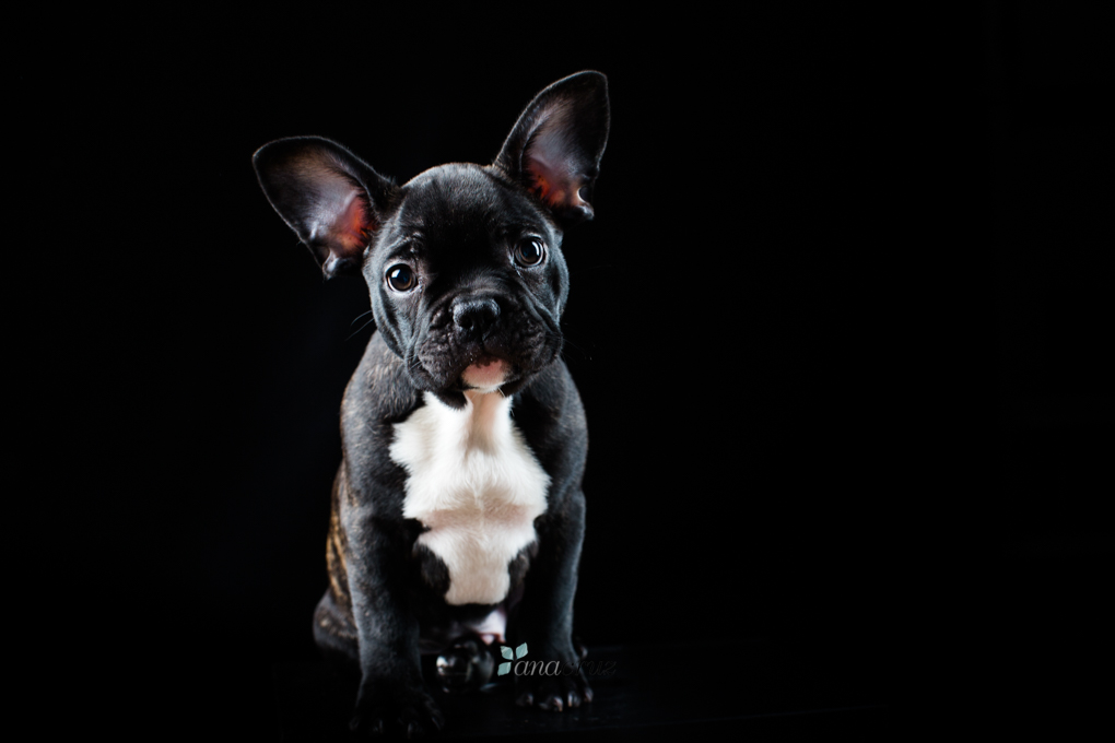 Portfolio de mascotas 41T7637
