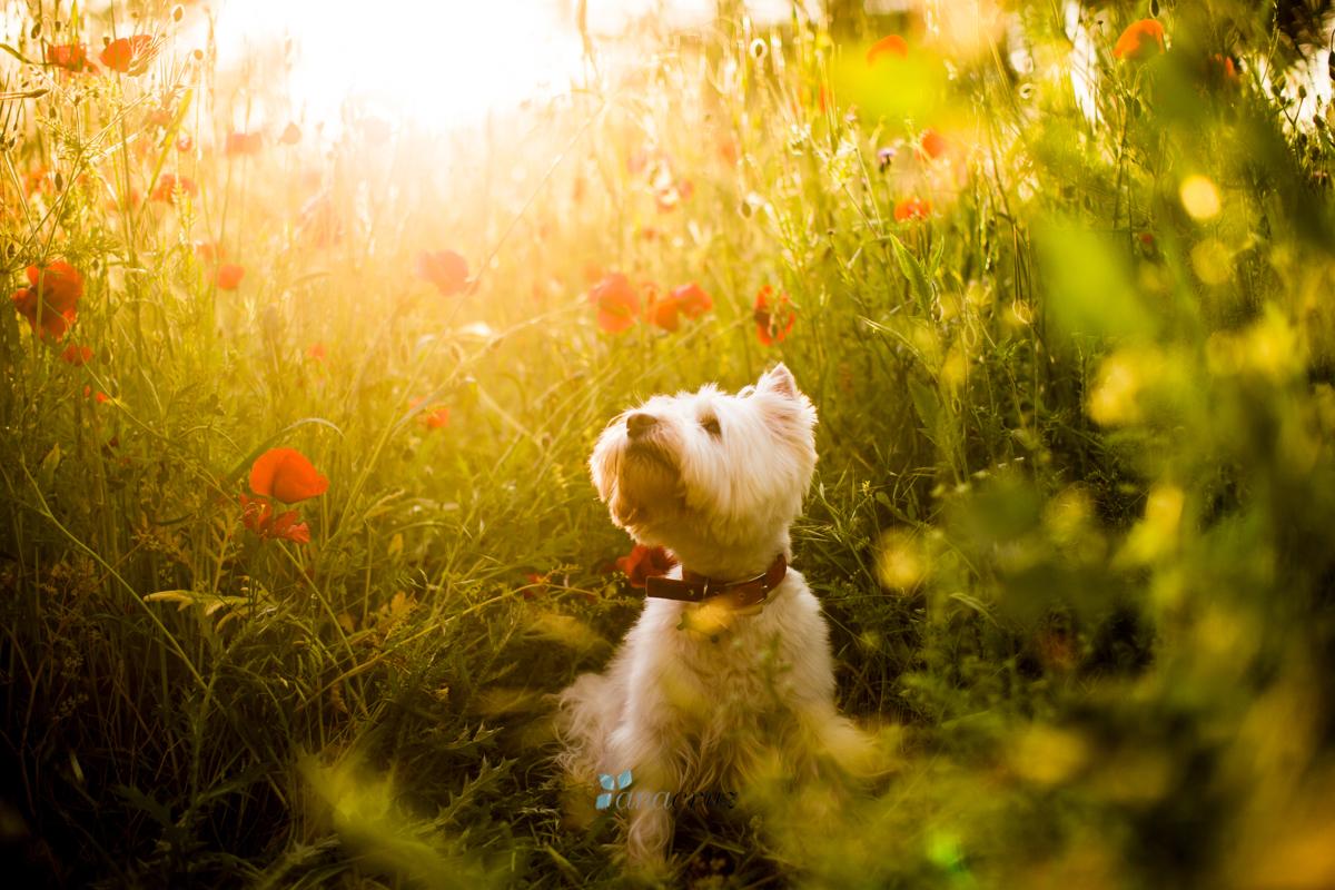Portfolio de mascotas ANA1330