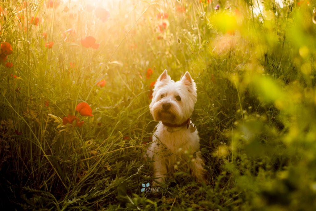 Portfolio de mascotas ANA1358-1024x683