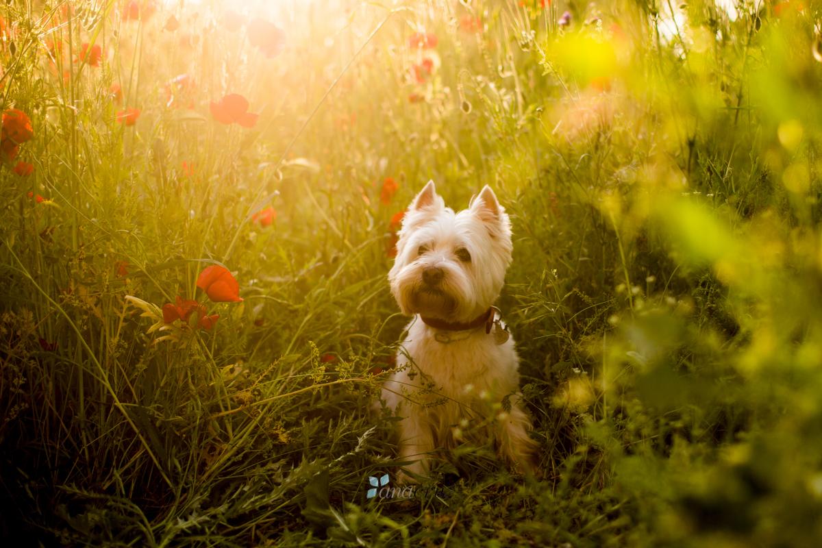 Portfolio de mascotas ANA1358