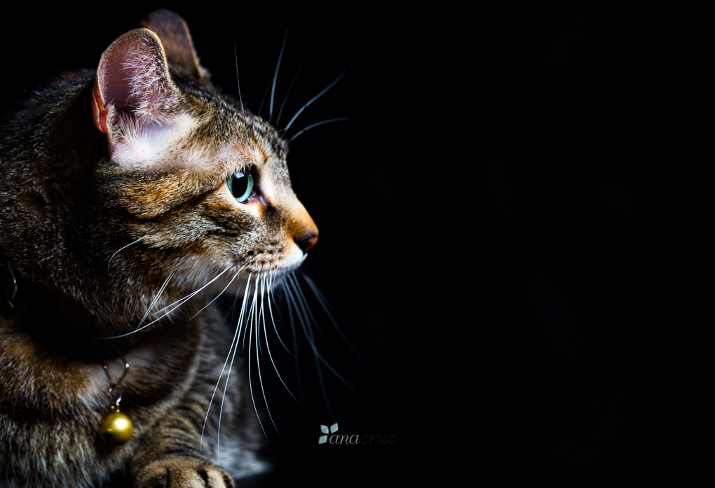 Portfolio de mascotas ANA5991