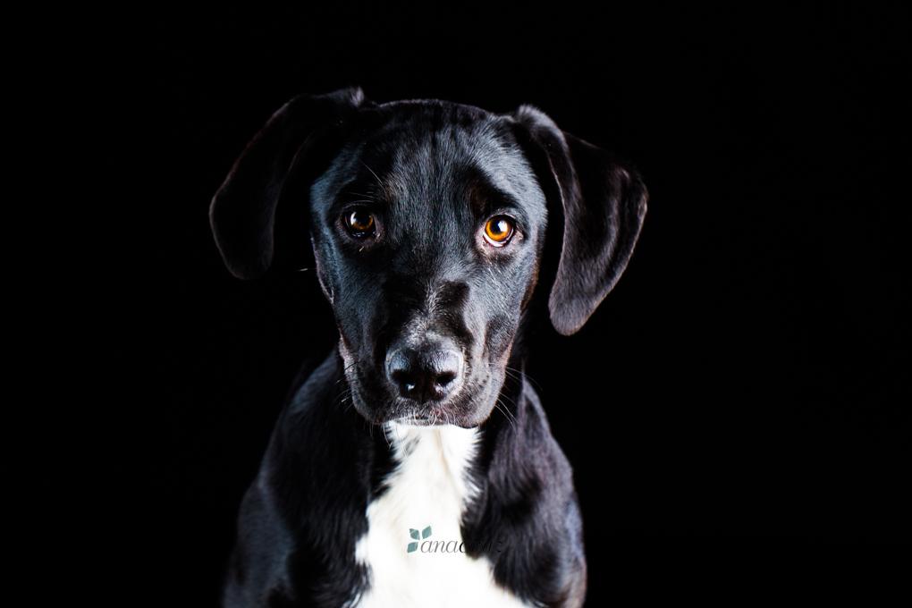 Portfolio de mascotas ANA6229