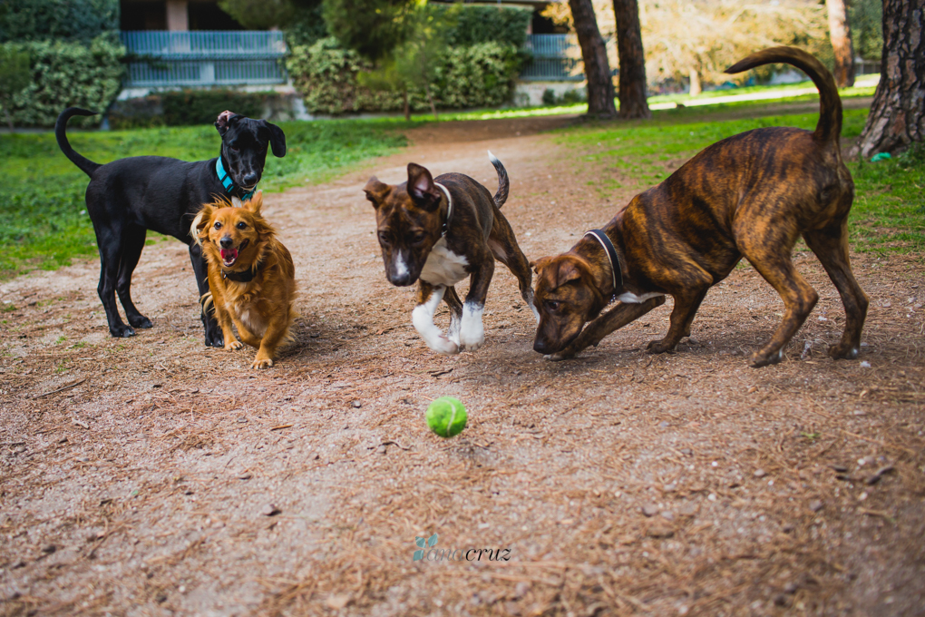 Portfolio de mascotas ANA9144