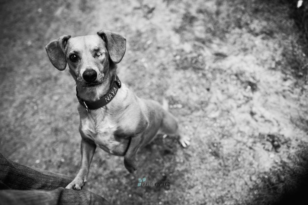 Portfolio de mascotas ANA9259