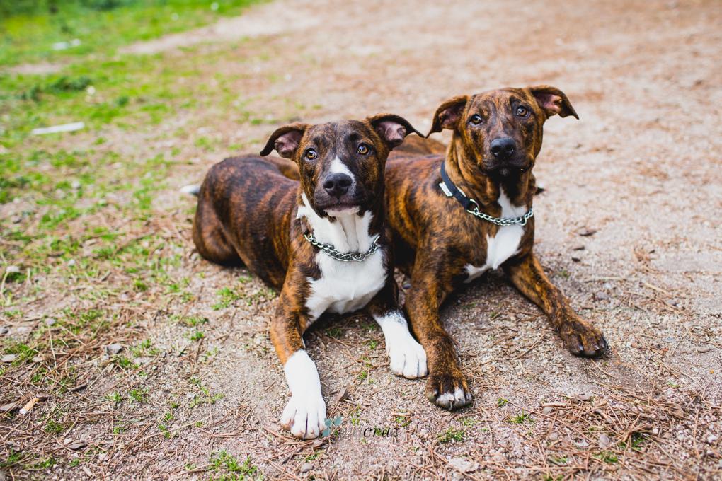 Portfolio de mascotas ANA9577