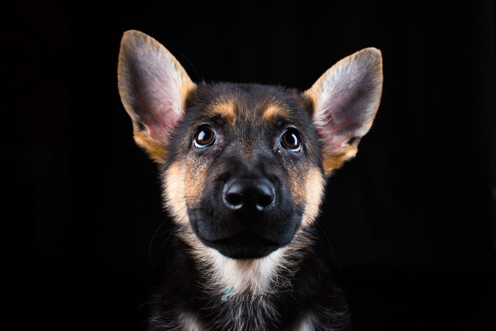 Portfolio de mascotas G5P4534