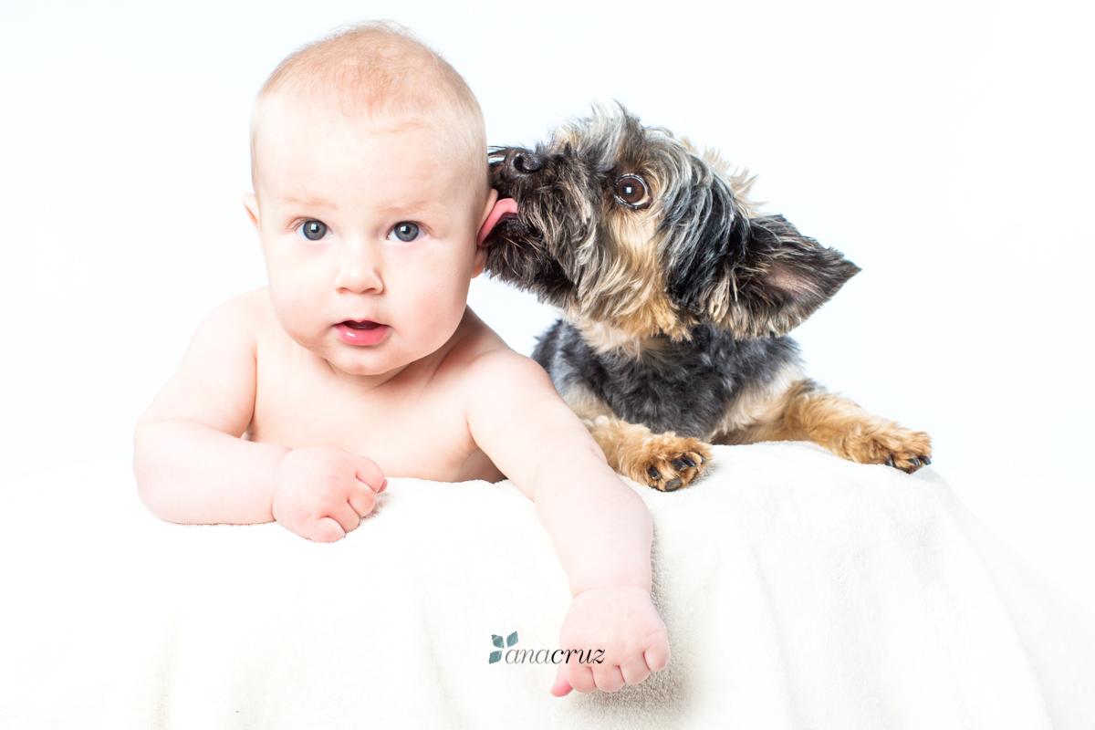Portfolio de mascotas INFANTIL1895