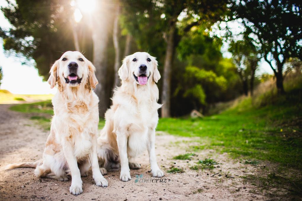 Portfolio de mascotas MASCOTAS0002