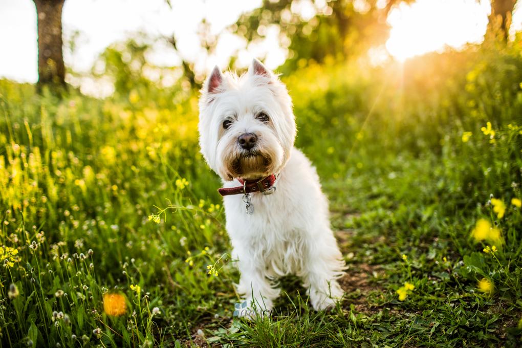 Portfolio de mascotas NA_7022