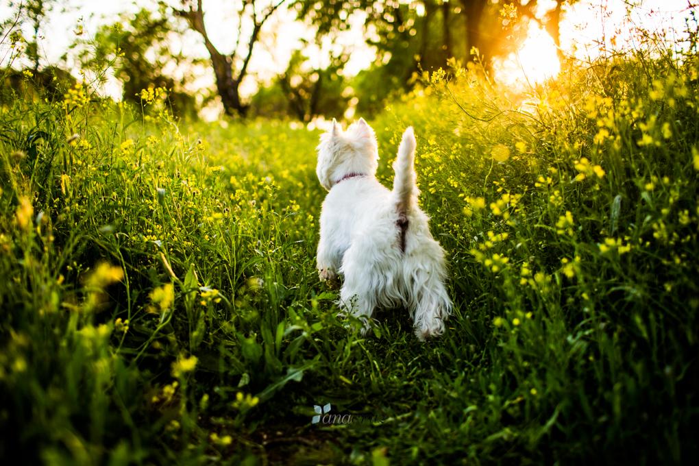 Portfolio de mascotas NA_7059